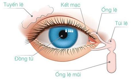 lấy mỡ mí mắt trên có ảnh hưởng đến kết mạc không-3